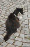 Gartenkatze Lizenzfreies Stockfoto