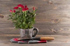 Gartenkonzeptstillleben mit Rosen, Handschuhen und Gärtner ` s trow Stockfotografie