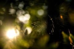 Gartenkreuzspinnenetz in einem Wald stockfotos