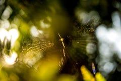 Gartenkreuzspinnenetz mit unscharfem Hintergrund lizenzfreies stockfoto