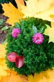 Gartenlächeln Stockbilder