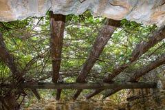 Gartenlaube bedeckt in den grünen Reben Stockfotos