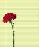 Gartennelke auf Papier Lizenzfreies Stockbild