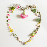 Gartennelke in der Liebes-Form Stockbilder
