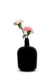 Gartennelke in der schwarzen Flasche Stockfotos