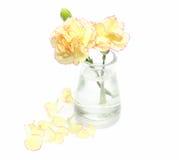 Gartennelke in einem Glasvase stockfotos