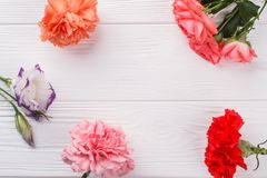 Gartennelke, Rosafarbener und lisianthus Eustoma blüht auf Weiß lizenzfreies stockfoto