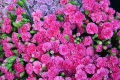Gartennelkehintergrund Lizenzfreies Stockfoto