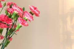 Gartennelken Lizenzfreie Stockfotografie