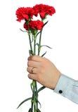 Gartennelken in der Hand eines Mannes Stockfotografie