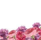 Gartennelken und Roserand lizenzfreies stockbild