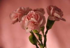 Gartennelkenblumenstrauß Lizenzfreies Stockbild