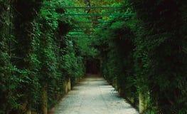 Gartenpergola-Tunnelgehweg im Park lizenzfreies stockfoto