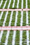 Gartenpfad Lizenzfreie Stockbilder