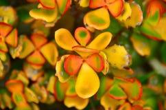 Gartenpflanze in Neuseeland Lizenzfreies Stockbild