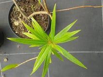 Gartenpflanzemotiv Lizenzfreie Stockfotos