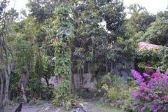 Gartenpflanzen Stockfotografie
