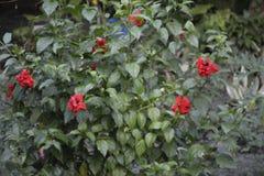 Gartenpflanzen Lizenzfreie Stockfotos