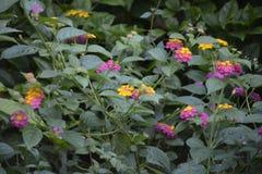Gartenpflanzen Lizenzfreies Stockfoto
