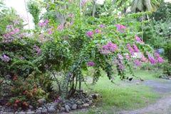 Gartenpflanzen Stockfoto