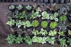Gartenpflanzen für Verkauf Lizenzfreies Stockfoto