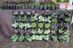Gartenpflanzen für Verkauf Stockfotos