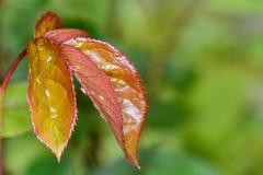 Gartenplagen, Insekten lizenzfreie stockbilder