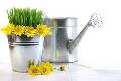 Gartenpotentiometer mit Gras, Gänseblümchen und Bewässerungsdose Stockfoto