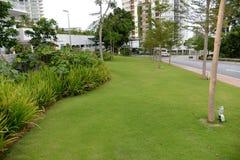 Gartenrasen Stockbild