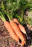 Gartenrettiche Stockbild