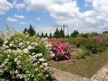 Gartenrosen - Eutopia-Garten - Arad, Rumänien stockbilder