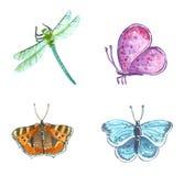 Gartenschmetterlinge und Libelle, Handgezogene Aquarellillustration vektor abbildung