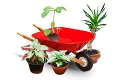 Gartenschubkarrewarenkorb und -anlagen Lizenzfreie Stockbilder