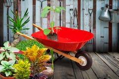 Gartenschubkarrewarenkorb und -anlagen Stockbilder