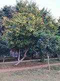 Gartenseitenanlage Lizenzfreies Stockfoto