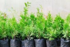 Gartenshop Eine Reihe von Thuja und von Wacholderbusch in den Töpfen bot für Verkauf an Stockfoto