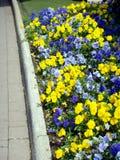 Gartensteinpfad und -blumen Stockfoto