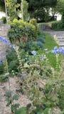 Gartenszene stockfoto