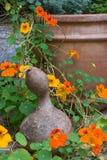Gartenszene mit Kürbis und Blumen Stockfotos