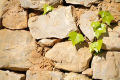 Gartenwand Stockfotografie