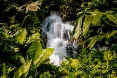 Gartenwasserfall in Singapur umgab mit Blättern stockfoto