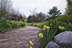Gartenweg mit Narzissen auf beiden Seiten Lizenzfreie Stockfotografie