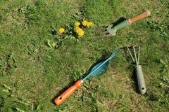 Gartenwerkzeuge für manuellen Unkrautabbau auf Rasen Stockfoto