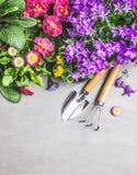 Gartenwerkzeuge mit dekorativem Sommer blüht auf grauem konkretem Steinhintergrund, Draufsicht Stockfotografie