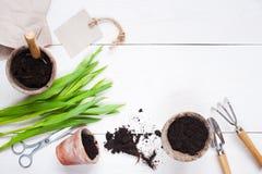 Gartenwerkzeuge und -tulpen auf dem Holztisch Stockbild