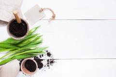 Gartenwerkzeuge und -tulpen auf dem Holztisch Stockfotos