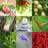 Gartenzeit Lizenzfreie Stockfotografie