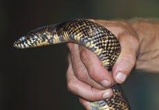 Garter Snake Stock Photos