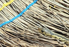 Garter snake and broom Royalty Free Stock Image
