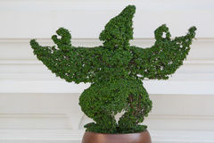 Garuda Bush (Anlage) Lizenzfreies Stockfoto